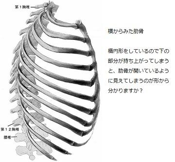 肋骨の開き2