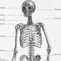 超初心者のためのダンス解剖学
