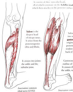 M2-knee (6)