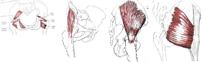 復習がてらにどれがどの筋肉だか当ててみてね anatomy of movement
